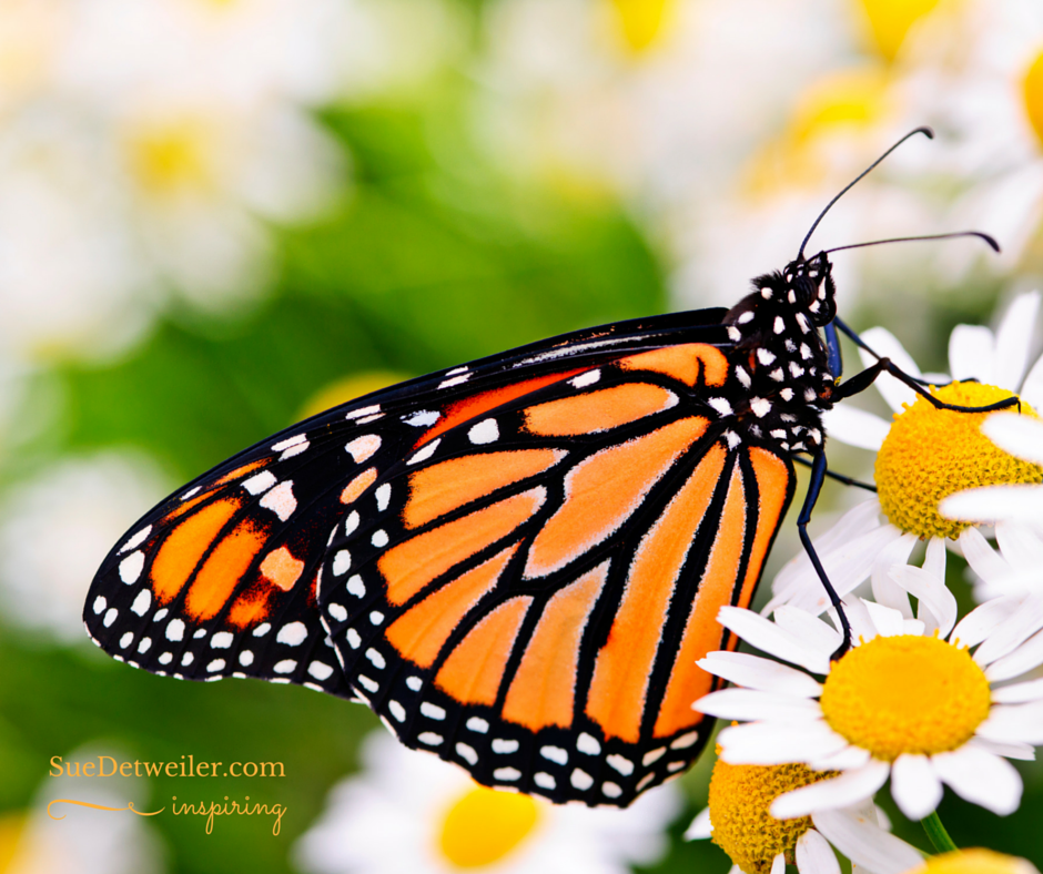 Transformation: Forming New Wings to Fly